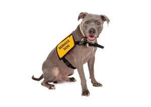 Een geleidehond kan u helpen bij het uitvoeren van dagelijkse bezigheden.