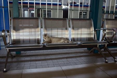 Een kat uit Den Helder is op de trein naar Arnhem gestapt. Rond Utrecht is hij ontdekt en naar het asiel gebracht.