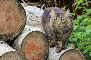 Kat ontsnapt uit de caravan van de buren en is spoorloos voor drie weken.