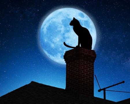 Zwarte katten zijn mysterieuze dieren. Vroeger werden ze vooral aanbid maar nu geloven mensen dat ze ongeluk brengen.