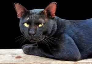 Katten werden vroeger als heilig beschouwd maar door de jaren heen hebben ze veel te verduren gehad