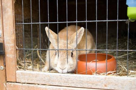 Konijnentherapie kan uitkomst bieden wanneer je konijn ongewenst gedrag vertoond. Lees er hier alles over.