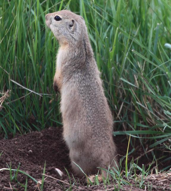 Veel soorten eekhoorns mag je niet meer als huisdier houden vanwege het voedsel of de huisvesting die deze dieren nodig hebben (dit is vrij gecompliceerd).©Kameron Perensovich, op Flickr. Licensie: Creative Commons BY-SA 2.0
