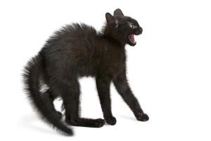 Agressie is een van de gedragsproblemen die kan ontstaan als je kat leidt onder stress. © lifeonwhite.com