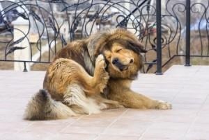 allergisch hond