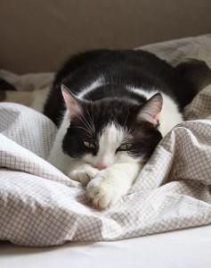 Regelmatig braken bij je kat kan meerdere oorzaken hebben.
