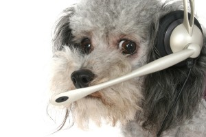 Callcenter hond voor contact formulier dierenarts-dierenkliniek