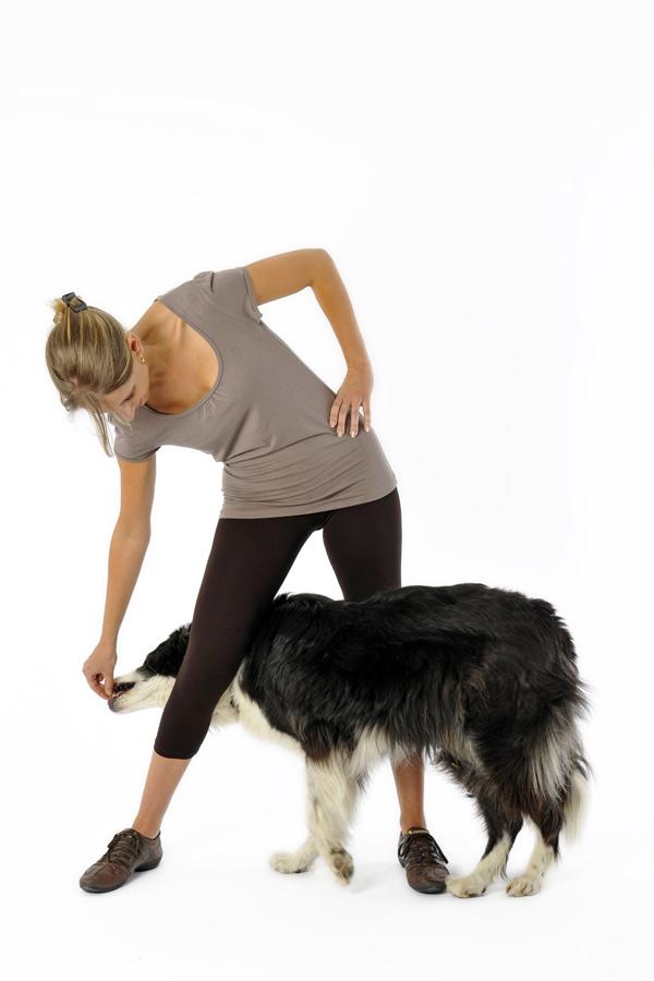 Tegenwoordig houden we honden vooral als huisdier. Vroeger hadden honden een functie bijvoorbeeld voor de jacht of het hoeden van het vee.©Fotolia