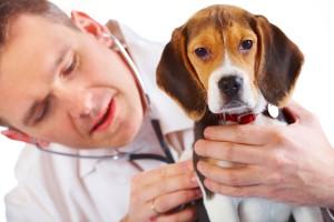 Dierenarts controleert de ademhaling van een hond