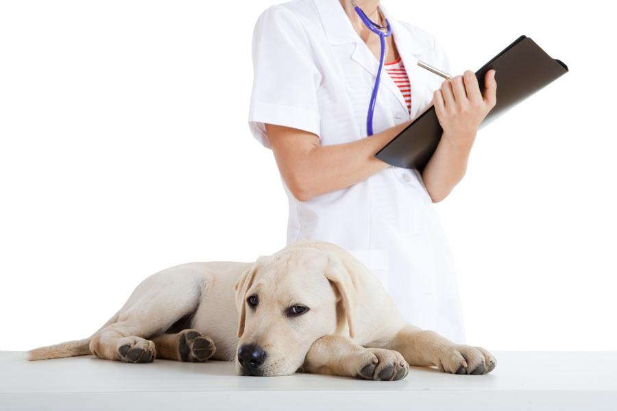 Vaccinaties die uw hond of kat al heeft gehad staan vermeld in het dierenpaspoort.©IKO - Fotolia
