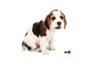 Een dierenvoedsel kan de oplossing zijn als je niet meer zelf het voer voor je huisdier betalen kunt.