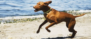 Het zijn vooral paarden en honden die de dierenfysiotherapeut helpt, maar ook katten en konijnen kunnen er terecht.