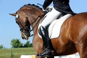 In de dressuurt toetst men hoe goed het paard de ruiter gehoorzaamd.