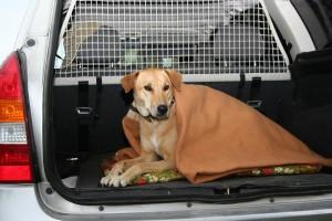 Een sterilisatie is een zware ingreep voor uw hond. Daarom is het aan te raden dat u uw hond na de operatie komt halen.©Conny Hagen - Fotolia