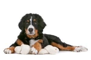 Hondencommunicatie is belangrijk om te begrijpen om verwarring te voorkomen.