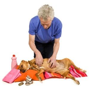 Als je hond gewend is aan hondenmassage kan hij in slaap vallen tijdens de massage
