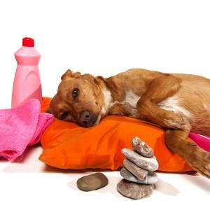 Hondenmassage vervangt niet het bezoek aan de dierenarts
