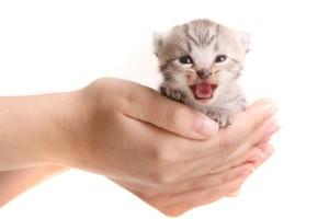 Als de fokker uw hond of kat al gechipt heeft, dient u uw huisdier nog steeds te registreren.© Sven Grundmann - Fotolia