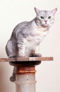 Krijg je een allergische reactie vanwege je kat, dan kun je hiertegen medicijnen innemen.