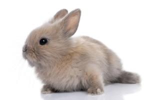 Veel mensen denken dat een konijn een knaagdier is. Dit is niet het geval.©lifeonwhite.com
