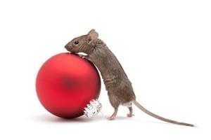 Wil je een muis als huisdier, neem er dan meerdere. Muizen zijn groepsdieren.©Copyright: Sascha Burkard