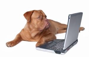 U kunt uw huisdier bij verschillende databanken laten registreren.© iNNOCENt - Fotolia