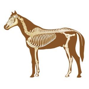 Paarden zijn planteneters.©alexonline - Fotolia