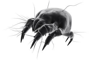 Teken worden tussen een halve millimeter tot enkele millimeters groot.©Sebastian Kaulitzki - Fotolia
