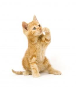 Zorg ruim van te voren dat je kat niet meer in de kinderkamer kan. ©Tony Campbell - Fotolia