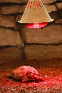 Een warmtemat is een oplossing als de warmtelamp niet voor voldoende warmte zorgt.©zingiber - Fotolia